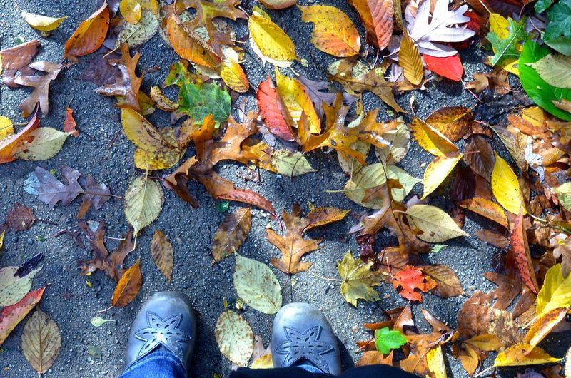 After-hurricane-sandy-shoes-leaves