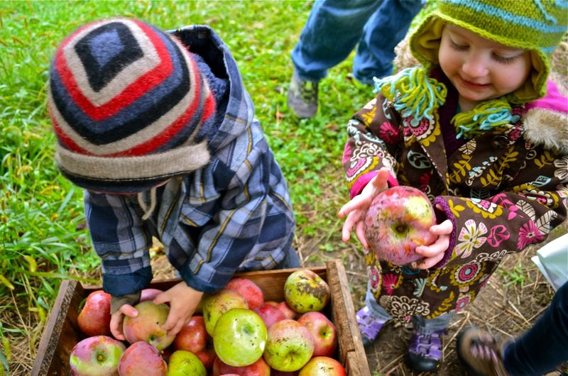 Twins-apple-gathering-picking