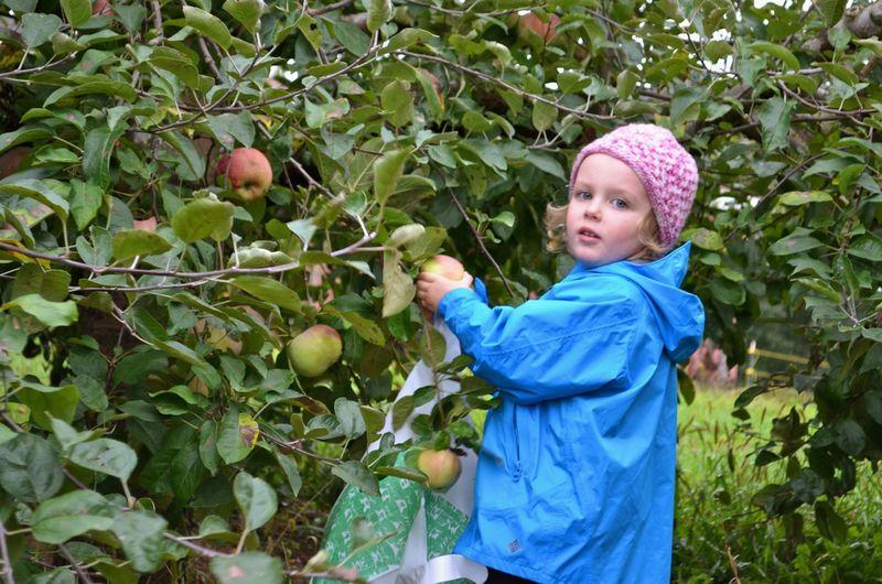 Junebug-apple-picking
