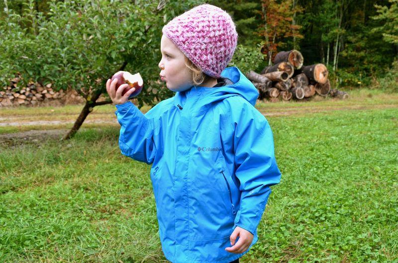 Junebug-apple-eating-logs
