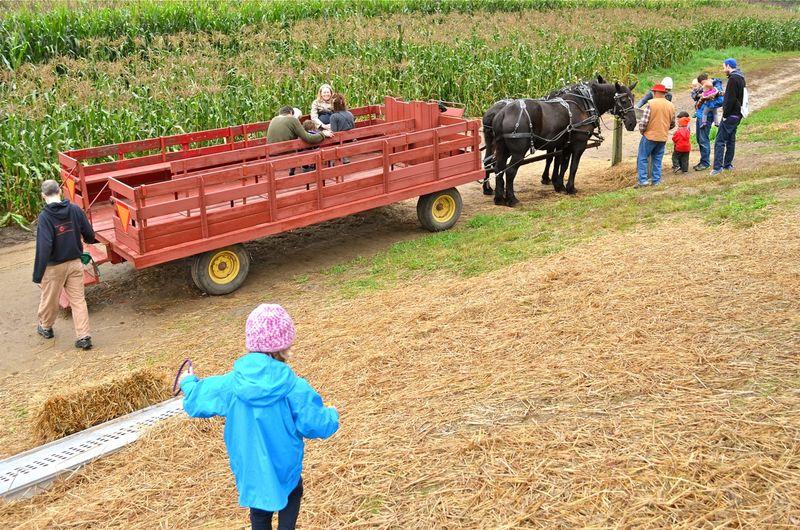 Apple_picking_wagon_ride