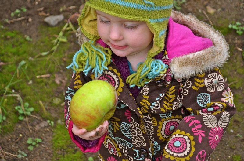Bee-examining-apple