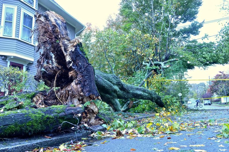 After-hurricane-sandy-fallen-tree-bicycle