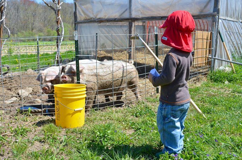 Buckle Farm Twins Visit09