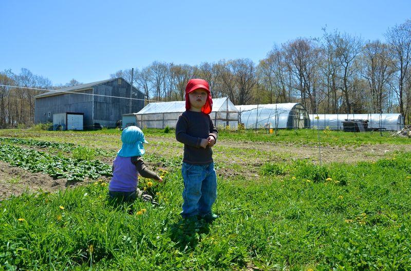 Buckle Farm Twins Visit15