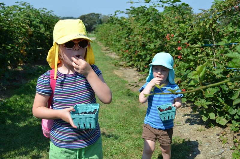 August-sweet-berry-farm-blackberry-picking-new-england06
