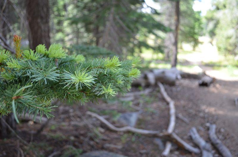 Sierras-anniversary-hike-getaway-california04