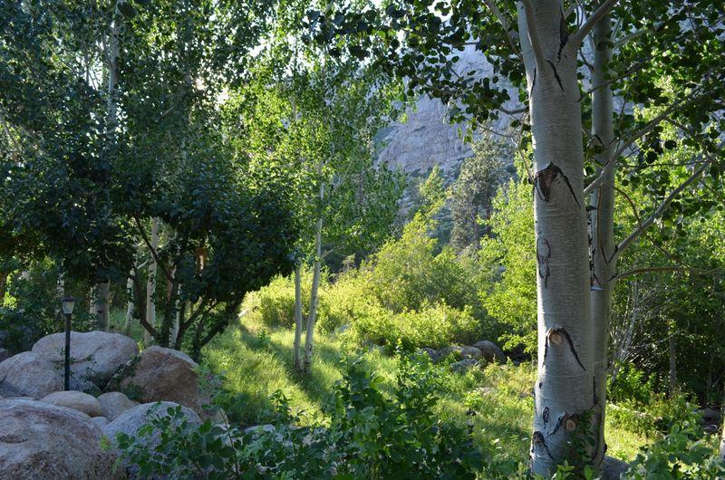 Sierras-anniversary-hike-getaway-california08
