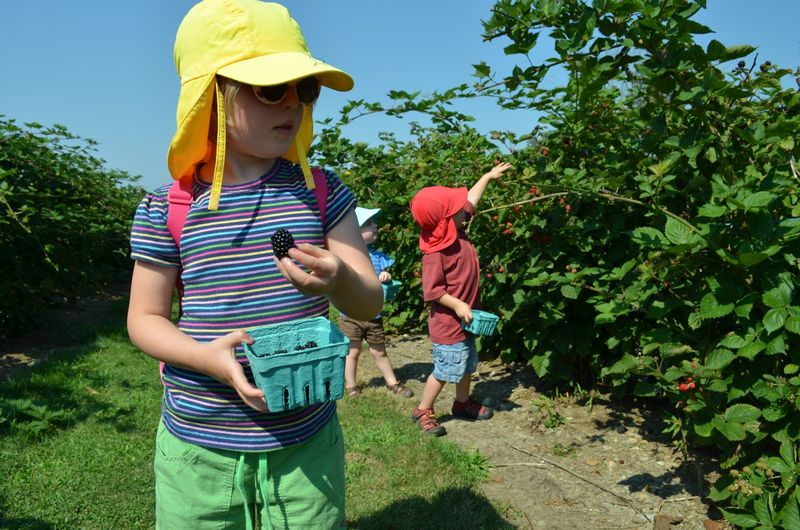 August-sweet-berry-farm-blackberry-picking-new-england05