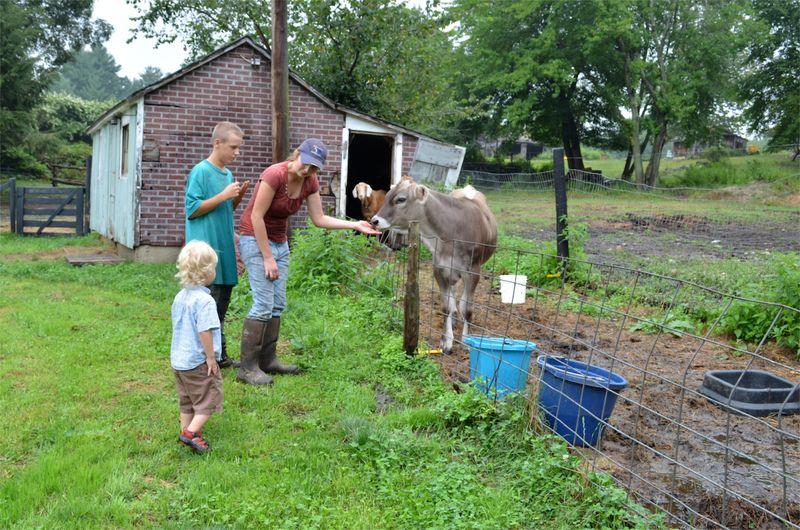 Buttercup raw milk farm sterling ct multiple realities03