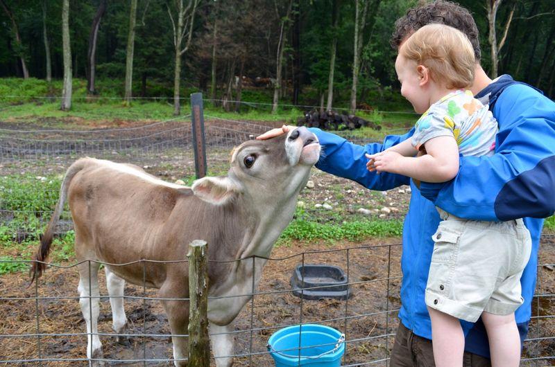 Buttercup raw milk farm sterling ct multiple realities04