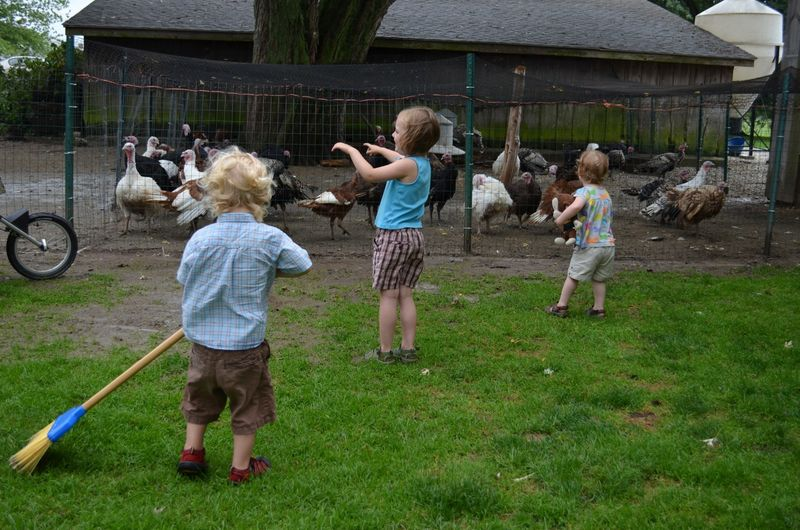 Buttercup raw milk farm sterling ct multiple realities18