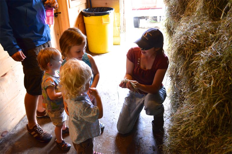 Buttercup raw milk farm sterling ct multiple realities02