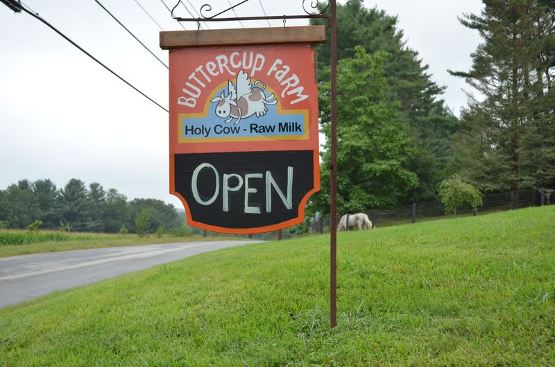 Buttercup raw milk farm sterling ct multiple realities14