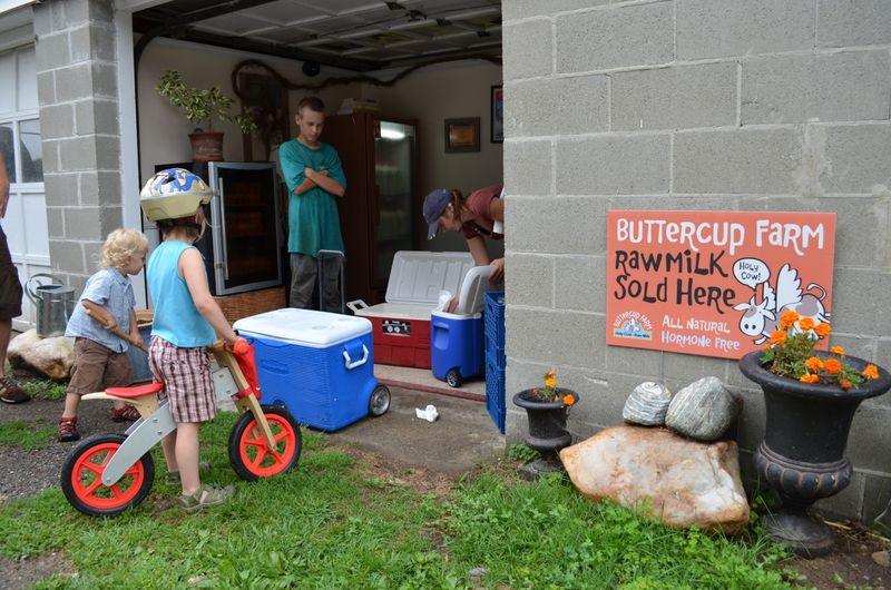 Buttercup raw milk farm sterling ct multiple realities10